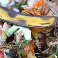 gaspillage alimentaire en restauration
